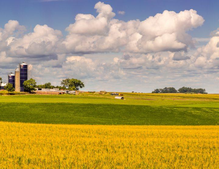 HIGTS: Quintessential Iowa Farmscape