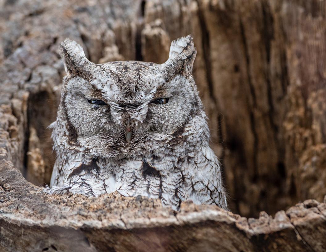 2018-calendar-iowa-owls18