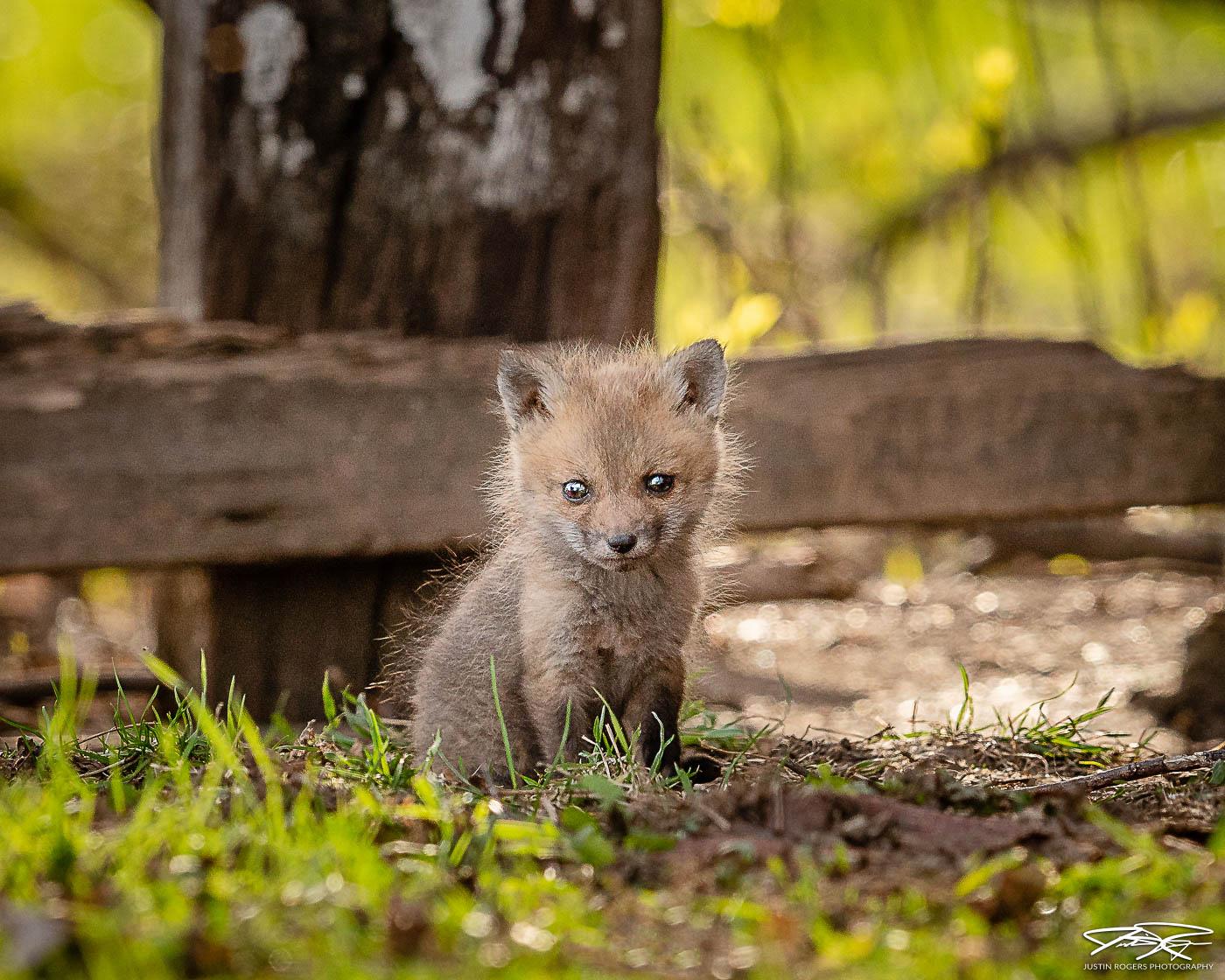 2021-02-fox-image