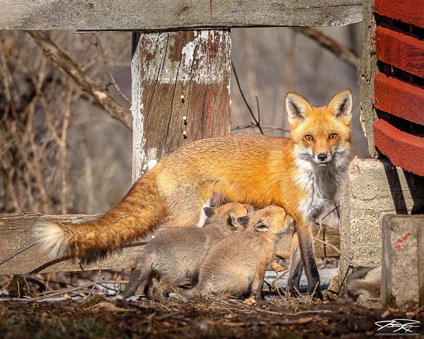 2021-03-fox-image