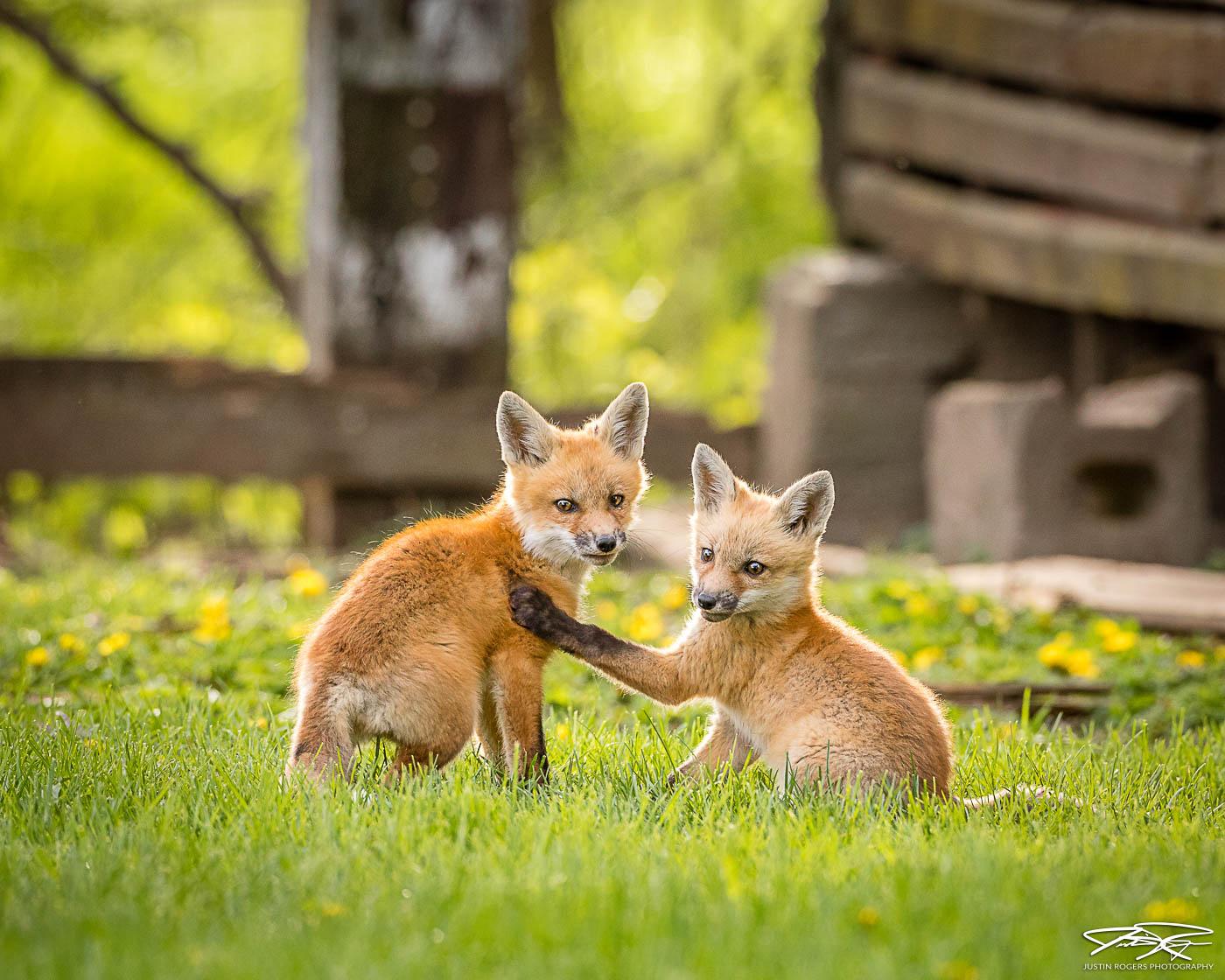 2021-08-fox-image