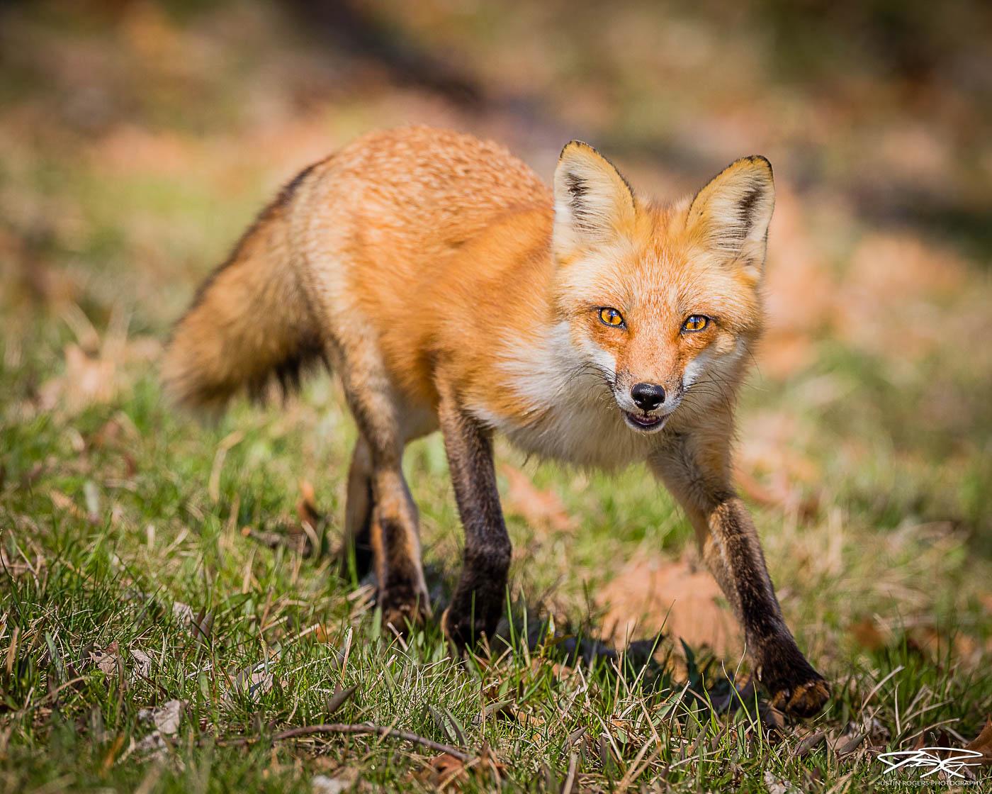 2021-09-fox-image