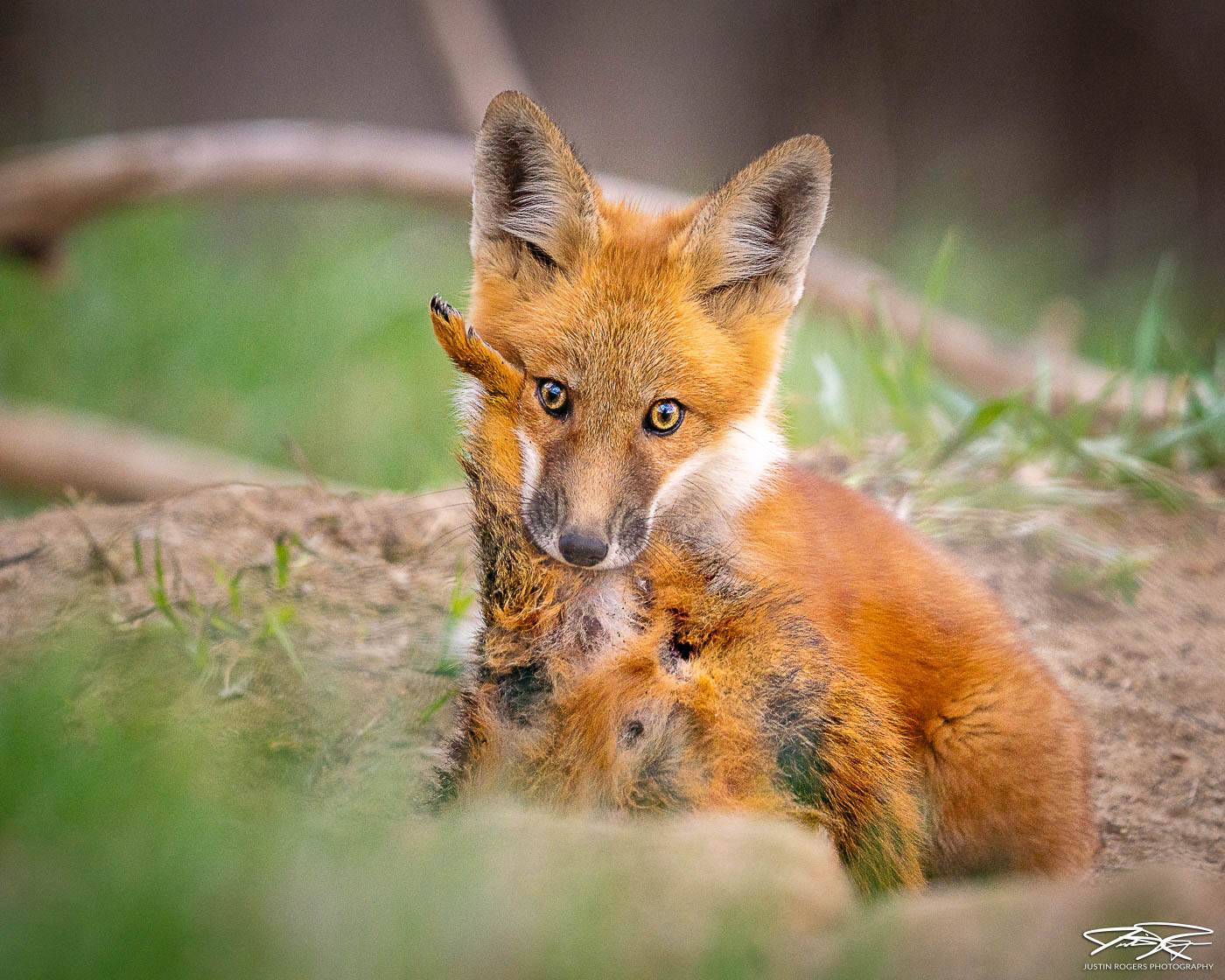 2021-10-fox-image