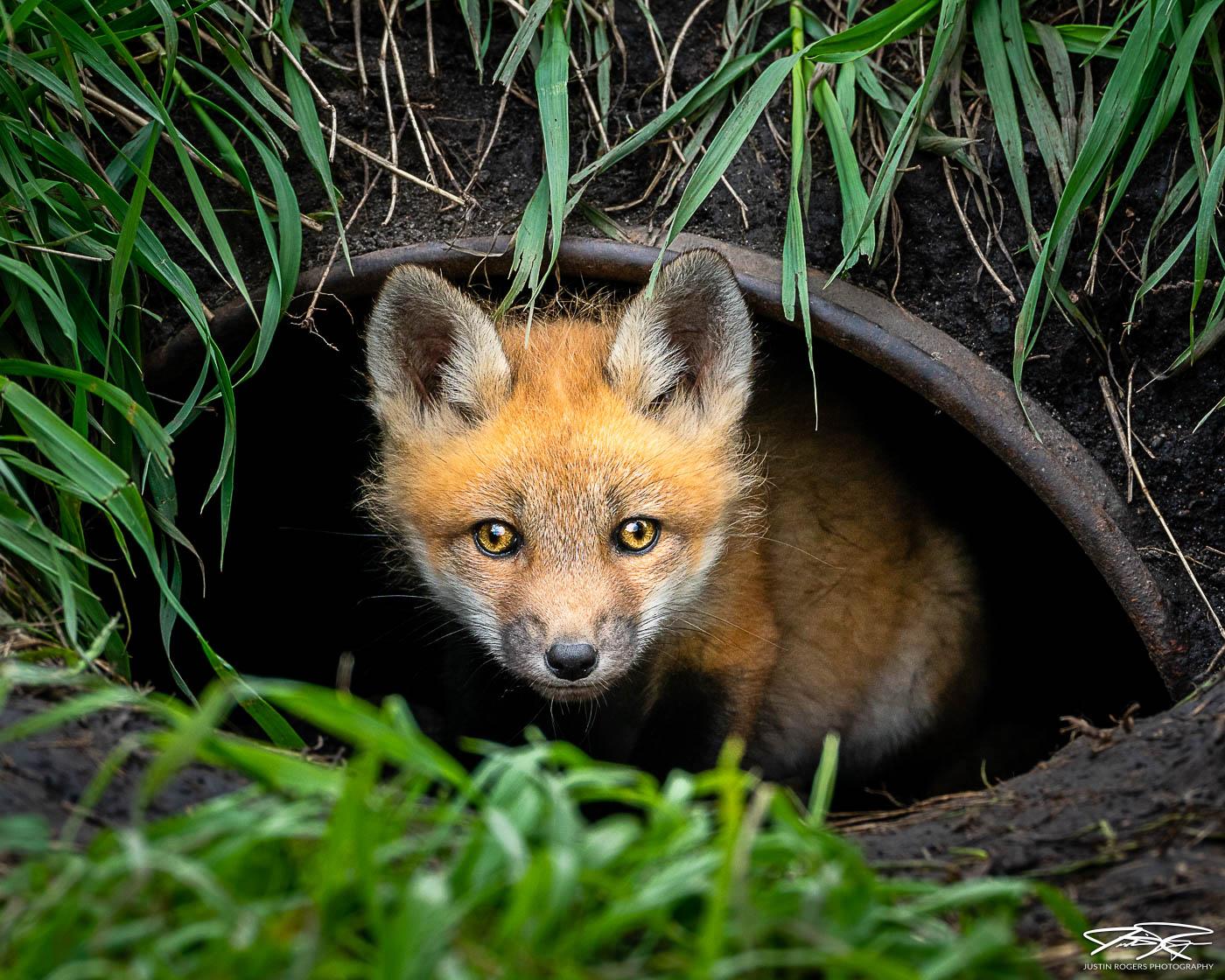 2021-12-fox-image